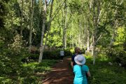 Walking trails at Bloedel Reserve on a Bainbridge Island day tour from Seattle