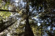 Towering trees at Bloedel Reserve on a Bainbridge Island day tour from Seattle